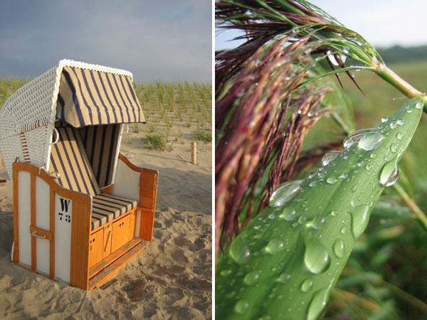 Ostsee - Strandkorb und Schilf