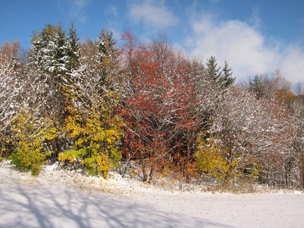 Herbst im Schnee
