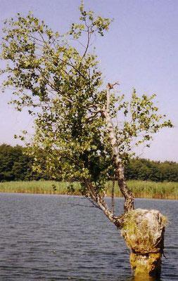 Mecklenburg - Useriner See