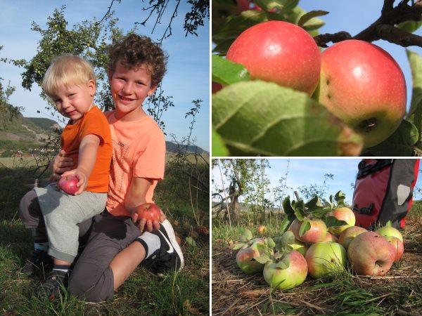 Apfelernte Golmsdorf